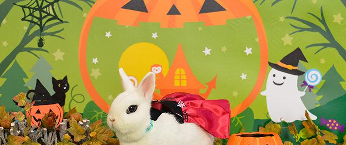 うさぎのしっぽ柴又店で「ハロウィン☆パーティ」の撮影会を開催します♪