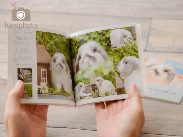 usagi-photobook